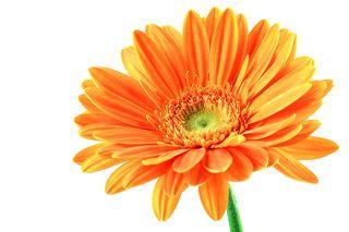 Blossom Reward