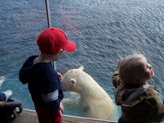 Connor & Aiden meet Mr. Polar Bear